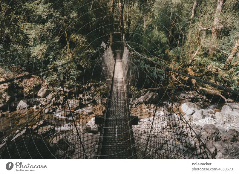 #AS# Suspension bridge Pteridopsida hike Subdued colour Contrast Green Forest Wild plant Wide angle Hiking adventurous Wilderness Lanes & trails ferns
