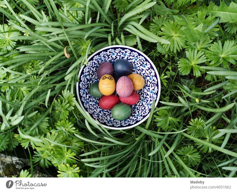 Colourful dyed Easter eggs in a patterned porcelain bowl in the green at Easter in Oerlinghausen near Bielefeld at the Hermannsweg in the Teutoburg Forest in East Westphalia-Lippe