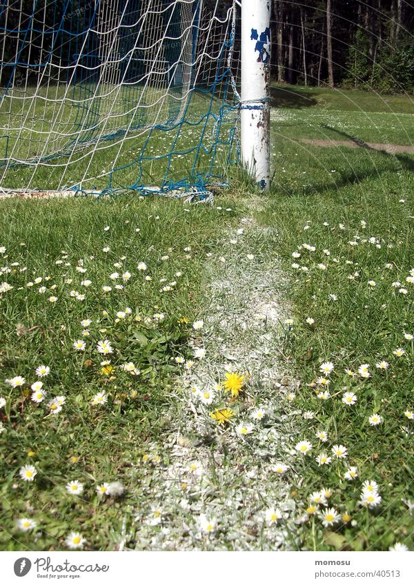 Sports Meadow Grass Soccer Gate Dandelion
