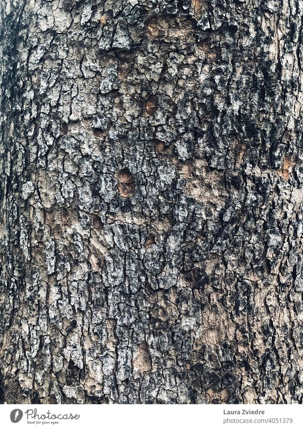 Closer to the tree and nature Tree trunk Trunk Tree bark Forest Wood Nature Plant Brown texture textured Texture of wood textured background old natural rough