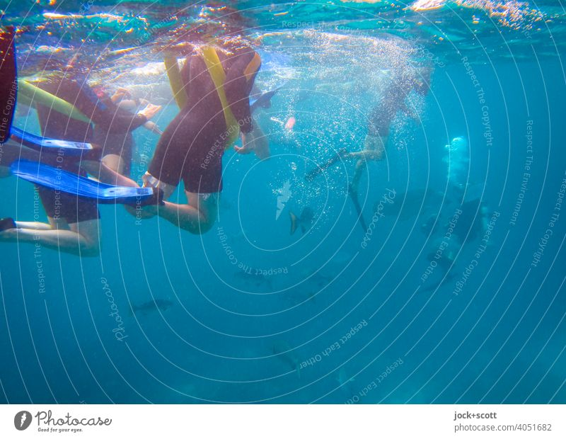 snorkeling and diving in the big blue Swimming & Bathing Dive Pacific Ocean Ease Underwater photo Sunlight Snorkeling Experience Snorkeler Aquatics Diver