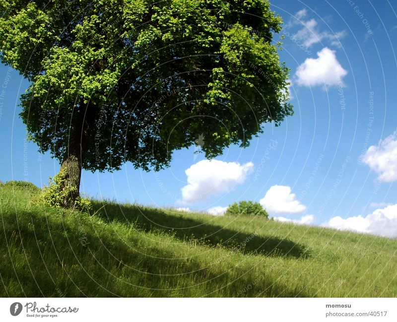 ball tree Tree Meadow Grass Spring Clouds Sky Shadow