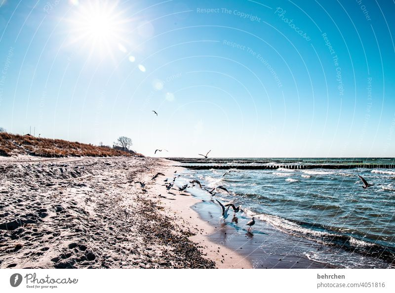 where the east sea waves trek to the land Blue Dream Wanderlust Longing wide Sky Baltic Sea Nature Water Waves Beach Ocean Darss Vacation & Travel Exterior shot