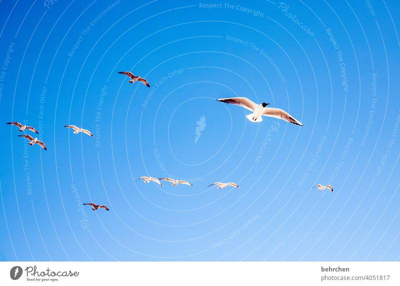 freedom birds gulls Free Freedom fischland-darß Baltic coast Mecklenburg-Western Pomerania Exterior shot Colour photo Vacation & Travel Darss Ocean Beach Nature