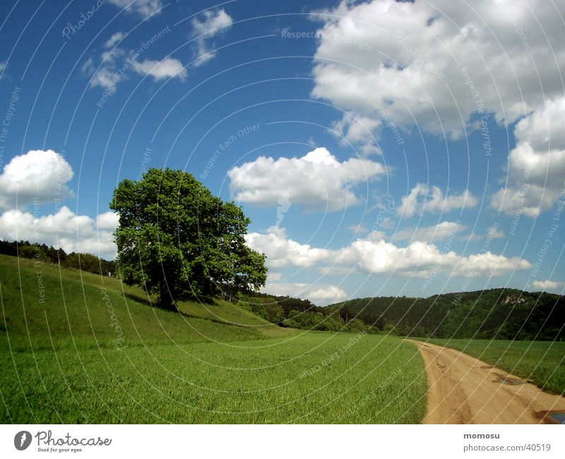 like in a picture book Tree Clouds Meadow Grass Green Mountain Sky Lanes & trails Street