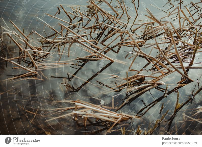 Plants on the water Water Abstract Nature background Autumn Fresh Green Garden Background picture Leaf Exterior shot Spring Fragile fragility Winter spring