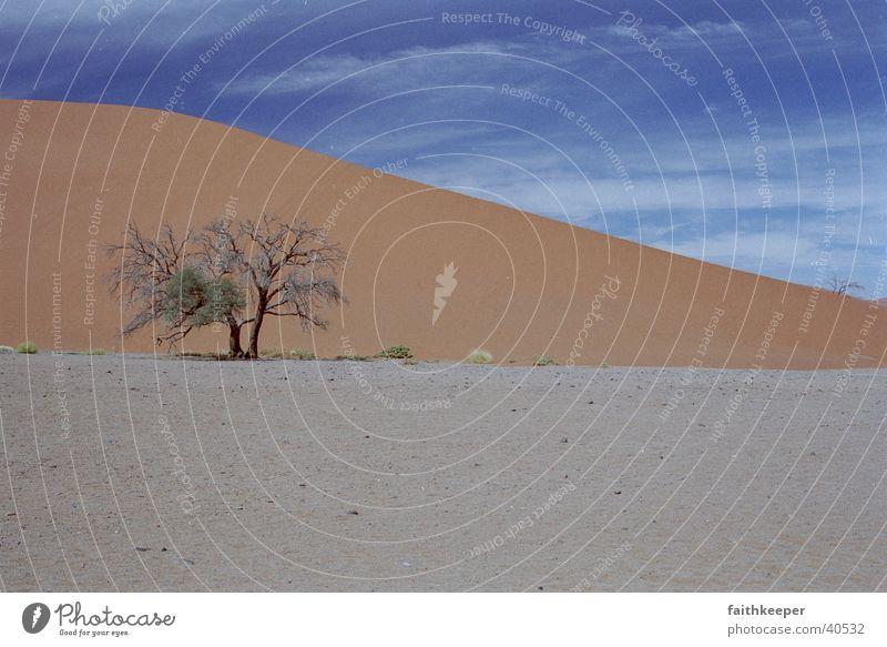 Tree Landscape Desert Blue sky Namibia