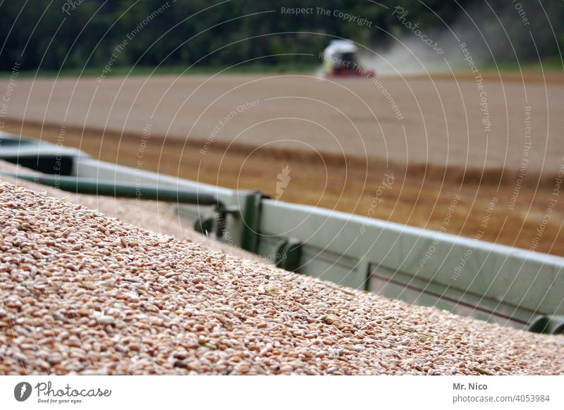harvest time Field Agriculture Grain field Nature Summer Cornfield Agricultural crop Wheat Nutrition Environment Harvest Growth Wheatfield Combine Rural