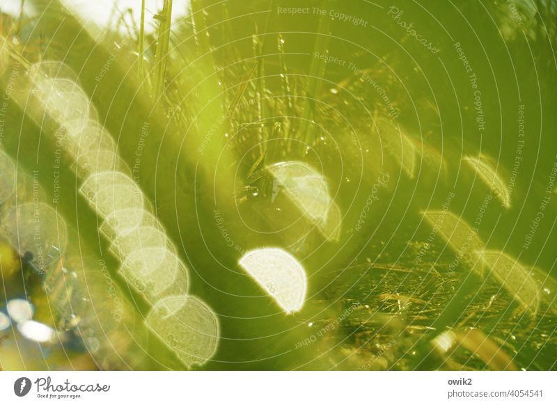Grass sparkle Nature shine Near Meadow Deserted naturally Delicate Wild plant Dew Hazy Early morning dew Plant Idyll Light Morning Sunlight Wet stalks Muddled