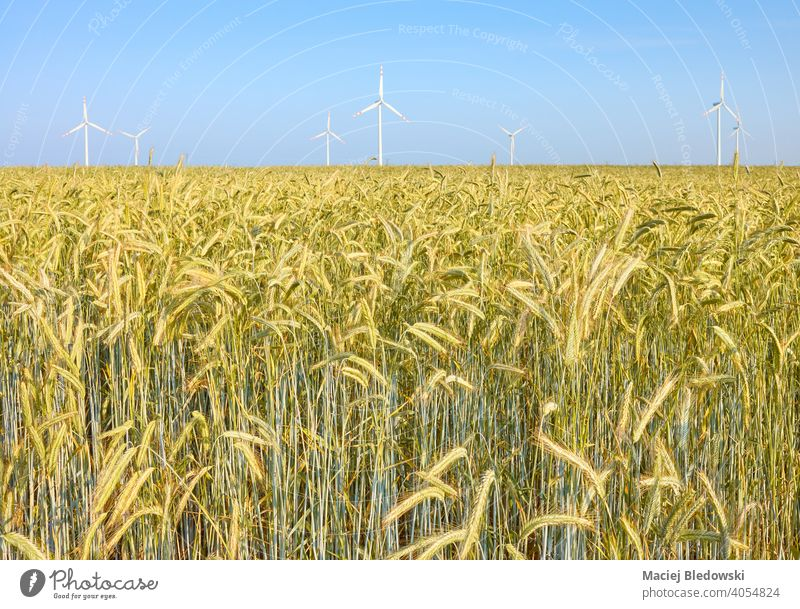 Crop field with windmills in background. agriculture farm crop sky environment technology nature electricity alternative renewable power industry green energy
