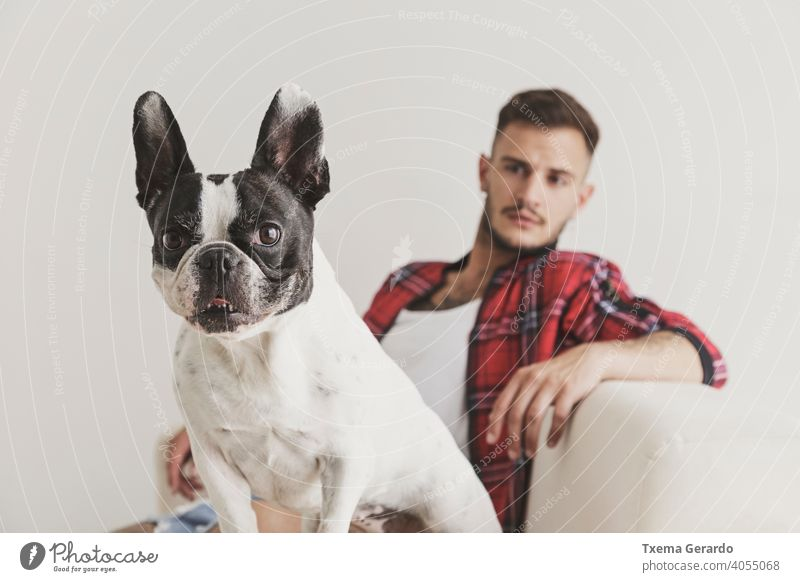 Foreground of French Bulldog dog sitting on a sofa with his friend in the background french bulldog boy piercing pierced hat earrings shirt hipster beard pet