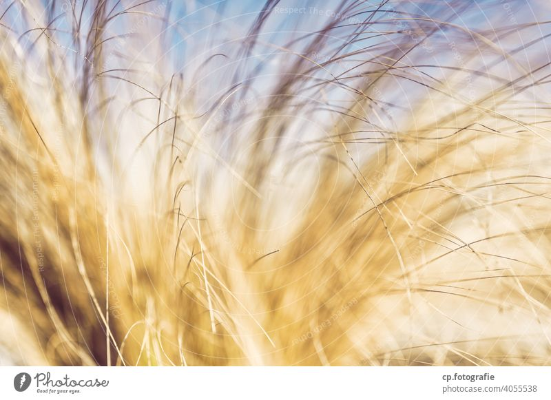 blurred yellow blades of grass Plant slender blurriness Yellow Deserted tufts Grass Beautiful weather