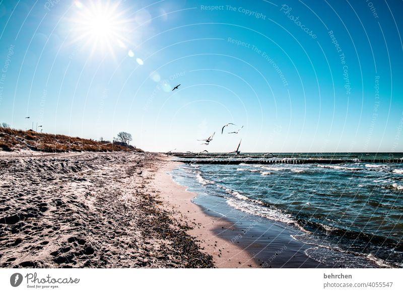 A day at the sea birds gulls Back-light Sunbeam Sunlight Freedom Mecklenburg-Western Pomerania Vacation & Travel Baltic Sea Blue Nature Dream Water