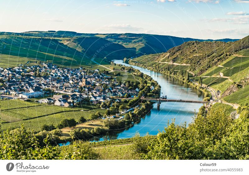 Trittenheim in Germany beauty mosel loop scenery plants germany europe nature trittenheim landscape wine vineyard river moselle valley panorama grapes