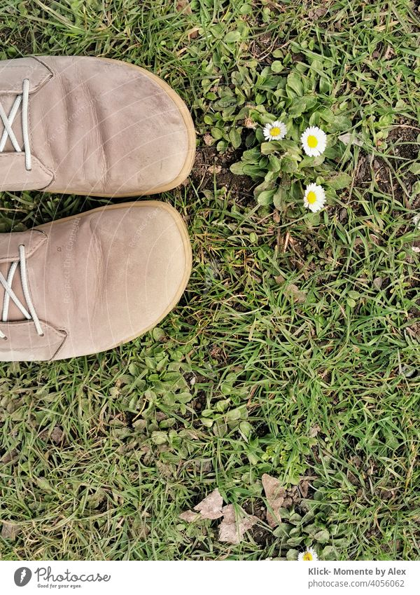 Shoes in the grass with daisies Footwear Grass Daisy Flower Meadow Green Spring Nature Plant Exterior shot Day