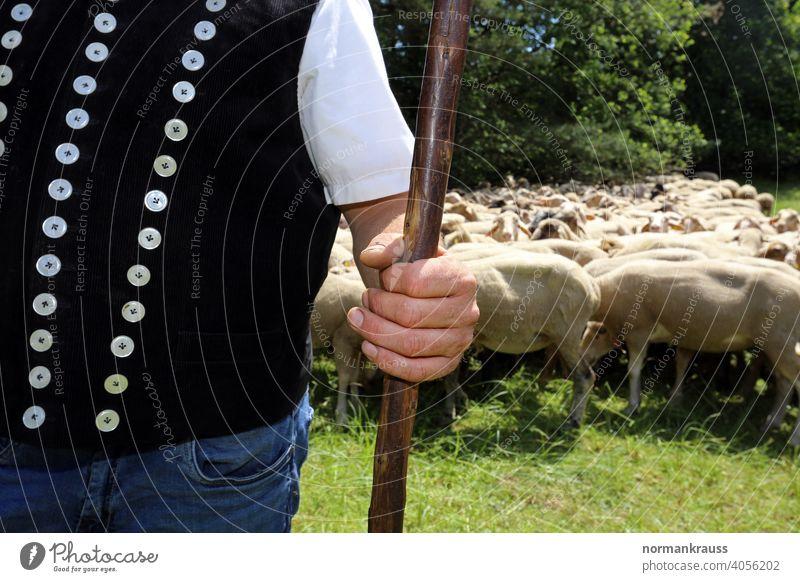 Shepherd with crook Herdsman Rod crozier Flock Hand sheep pasture graze