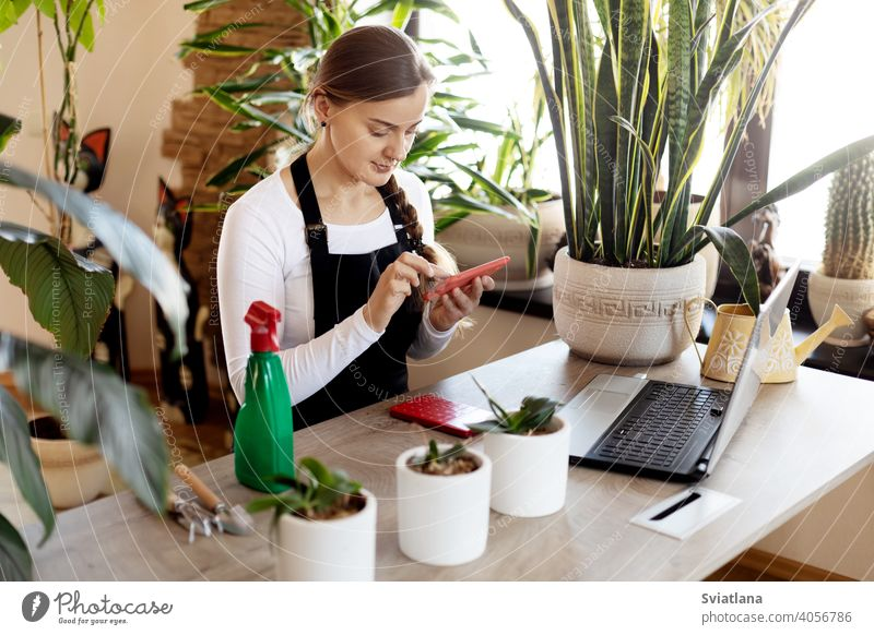 A florist girl uses her phone to take orders online at a flower shop. laptop young female using portrait business plant green fresh happy owner store occupation
