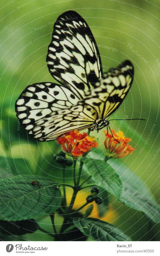 Green Sun Summer Flower Butterfly