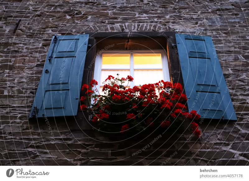 the last one turns off the lights... Calm idyllically Idyll Shutter Plant Building Living or residing House (Residential Structure) Window Facade Curtain