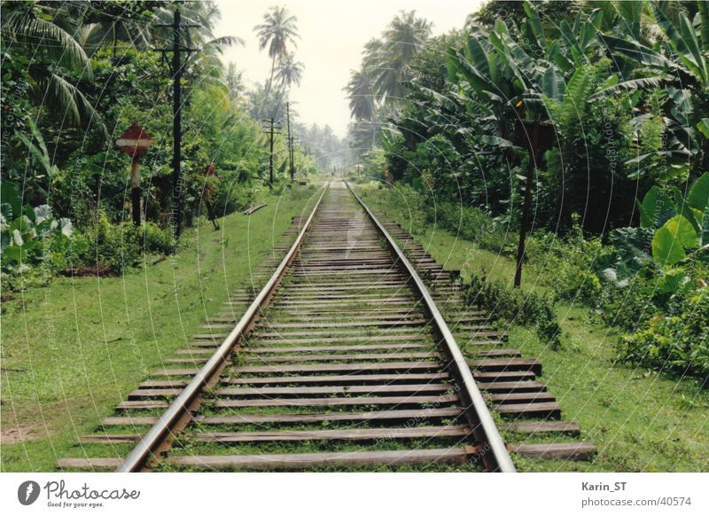 One-way through the jungle Sri Lanka Railroad tracks One-way street Virgin forest Palm tree Vacation & Travel Green Sky