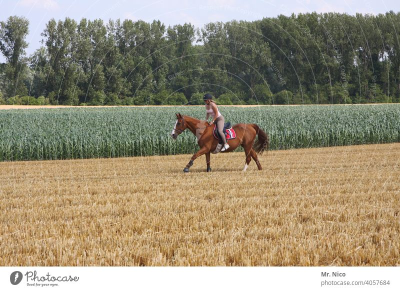 horseman and horsewoman Leisure and hobbies Farm animal Horse's gait Ride Equestrian sports Rider Landscape Sports Animal Nature riding horse