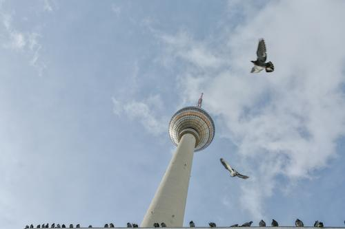 Pigeons fly around the TV tower Berlin Television tower Middle Alexanderplatz Berlin TV Tower Downtown Berlin Sky Landmark Capital city Tourist Attraction