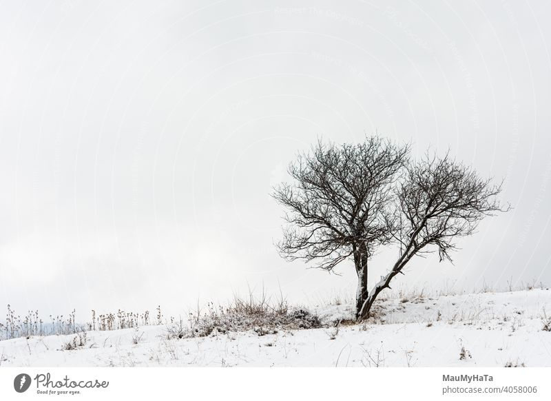 A lone tree in a field Tree clouds nature hill snow only winter