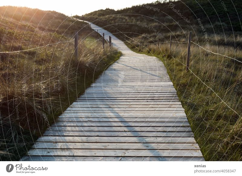 Wooden path between grass and fence leads towards yellow light of the sun Woodway off Sun Landscape Grass Light Sunset Fence evening mood duene Evening Morning