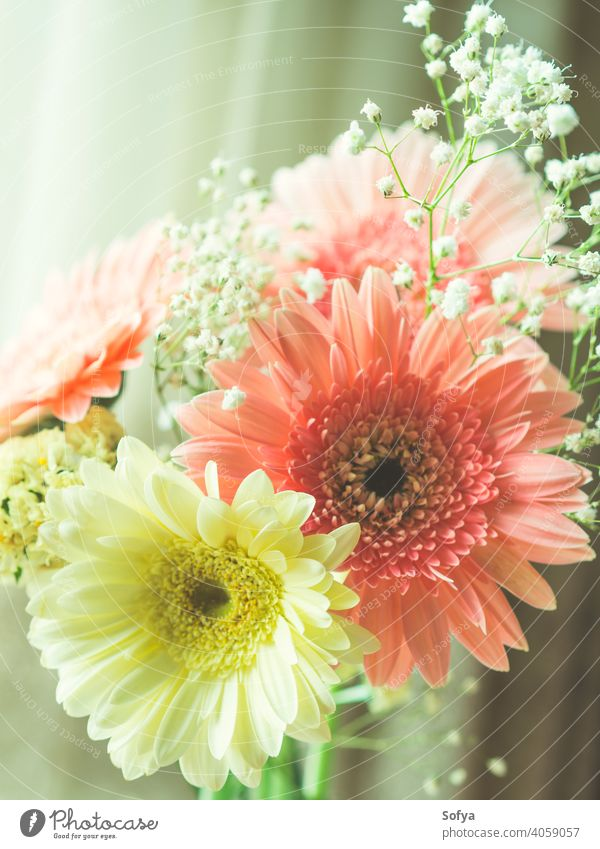 Pink gerbera daisy bouquet near a window flower vase womens day mothers day spring anniversary fresh background pastel color pink design white birthday interior