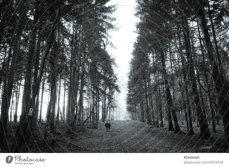 Together along the path - Two walkers walking along a wide forest path towards the fog - black and white image Black & white photo To go for a walk Promenade