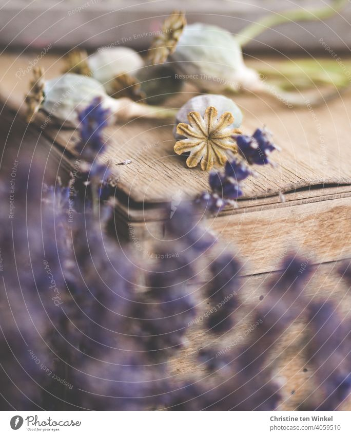 Dried poppy pods lie on an old wooden box. In the foreground blurred lavender flowers can be seen poppy seed capsules Dry Shriveled Faded Lavender Wooden box