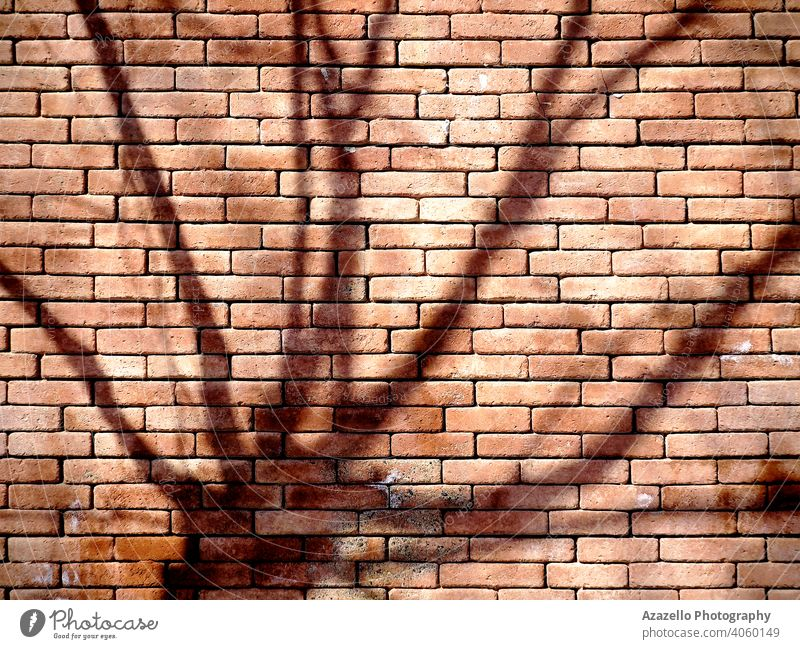 A brick wall background with a tree shadow. abstract art abstract object architecture backdrop bare tree black block brickwork brown cement concrete dirty ghost
