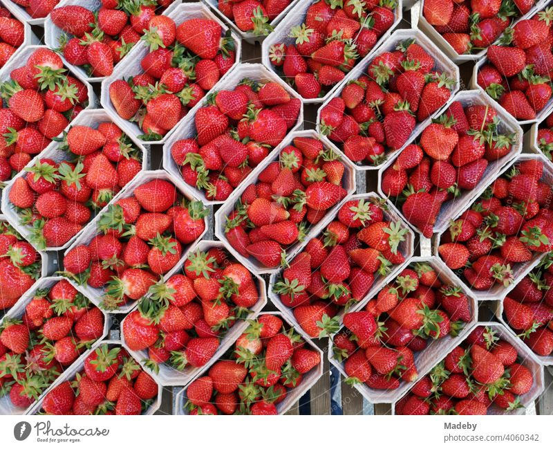 Fresh red strawberries in plastic trays at the weekly market at the Bockenheimer Warte in Frankfurt am Main Bockenheim in Hesse Strawberry strawberry Fruit