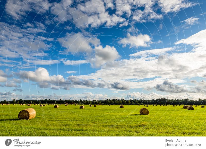 Field is full of hay balls with white clouds blue sky during late summer afternoon in Estonia. Electrical wires leading to the forest. Scenic summer day