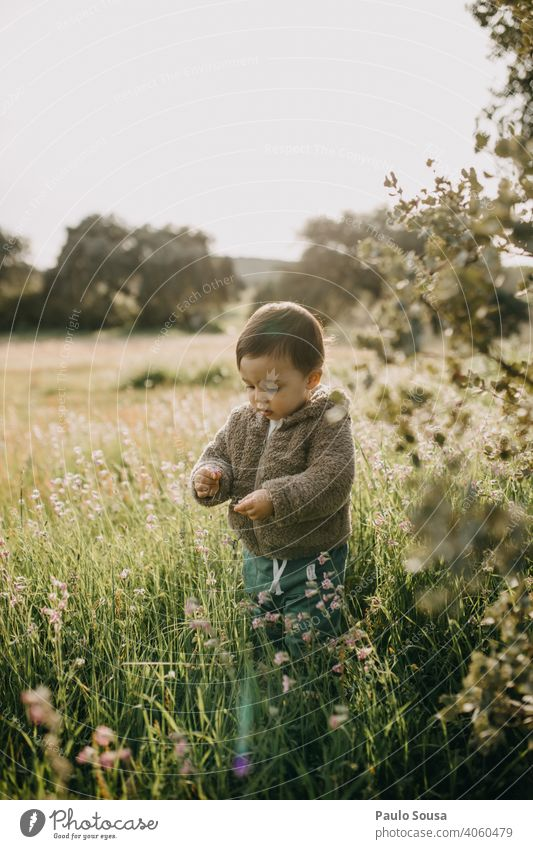 Child picking spring flowers 1 - 3 years Caucasian Authentic Spring Spring flowering plant Spring day Colour photo Nature Exterior shot Day Spring fever Flower