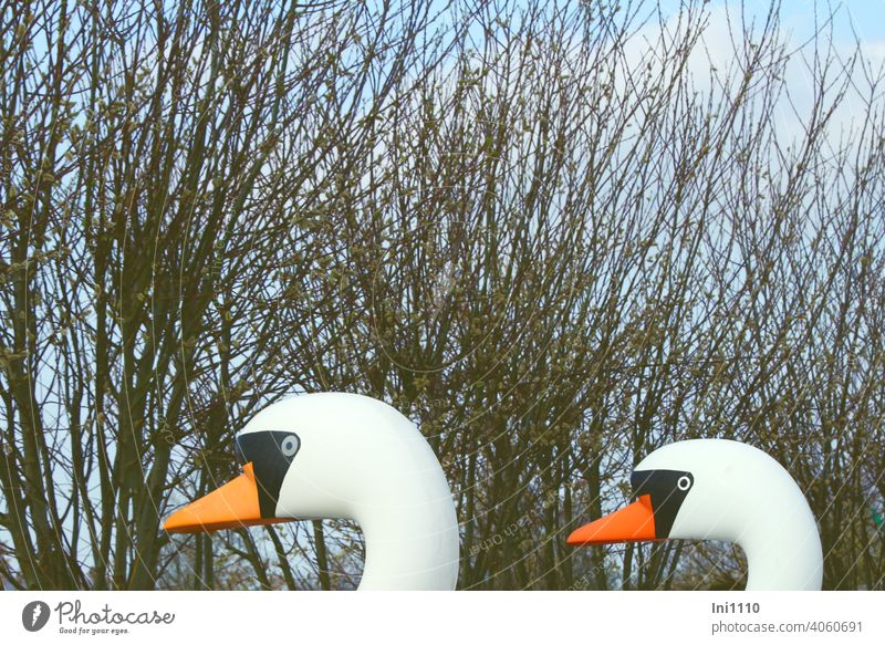 two heads of swans pedal boats in the background willow catkins and blue sky Pedalo Swan partial view Catkin Plasitk Usedom backwater Funny sunshine Jokers
