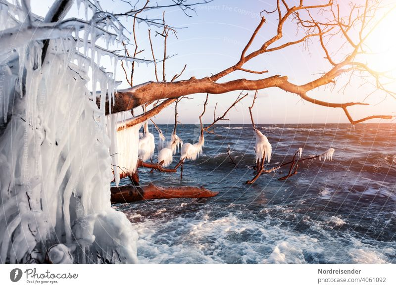 Iced dead wood in winter at the Baltic Sea Winter Ocean coast Sun Waves Water Icicle Frost Sunbeam winter landscape Tree Driftwood vacation Winter vacation
