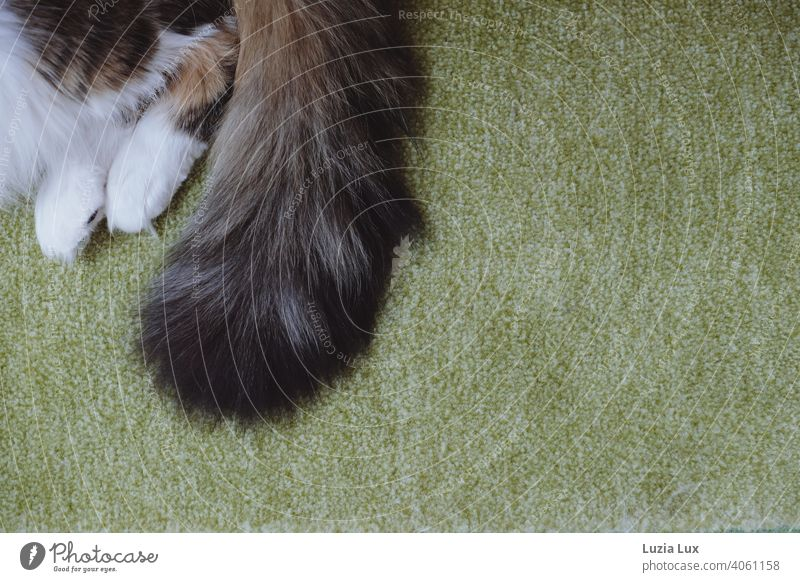 Cat tail and paws on green carpet, pure relaxation Cat Paws White fuzzy Long-haired mackerelled shaggy relaxed Green Domestic cat Pelt Pet pretty daintily