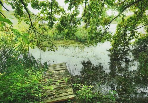 Old planks Footbridge Wood Lake Beautiful weather Nature Environment Appealing Challenging Exterior shot Colour photo trees Green Mysterious silent enchanted