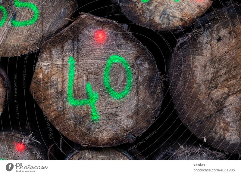 40 in bright green is written on a tree trunk, in addition two red dots shine on the wood Tree trunk Stack of wood Forestry Wood Logging Timber Environment