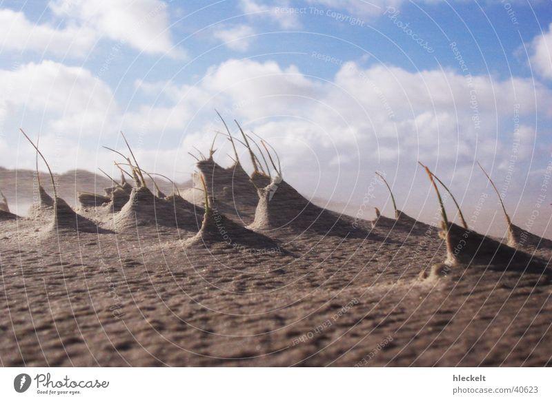 Dunes in the wind Ocean Clouds Lunar landscape Beach Sanddrift Beach dune Wind Sky