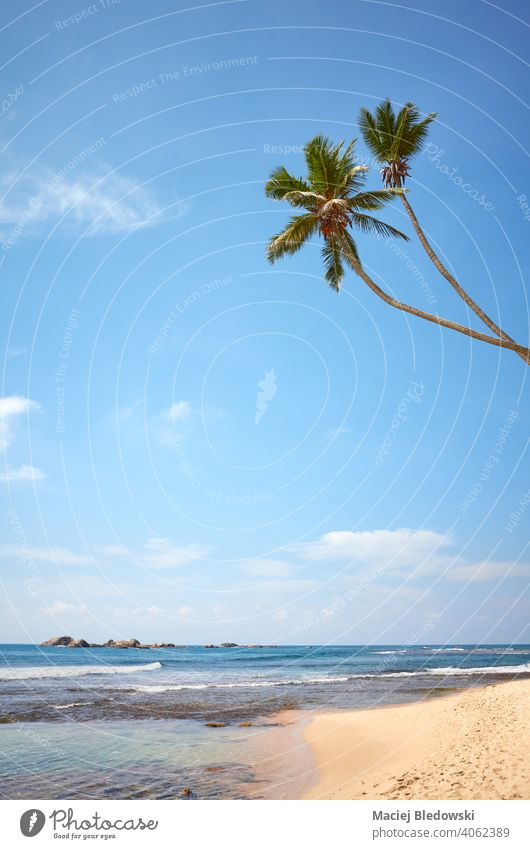 Tropical beach with coconut palm trees on a sunny summer day. paradise ocean nature tropical travel water sea sand island landscape blue idyllic coast seascape