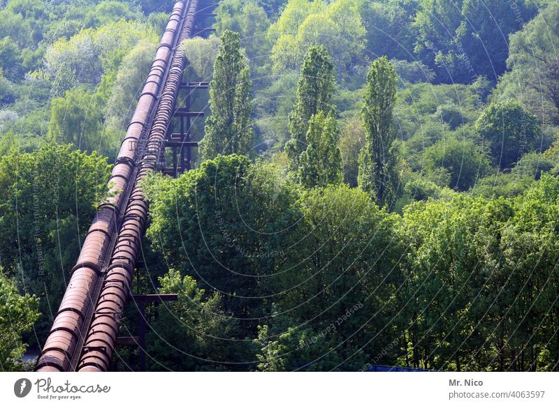 pipeline Pipeline Forest Industry Technology Line Environment Energy Force Nature Gas Construction Engineering Landscape Infrastructure Conduit Long Diversion