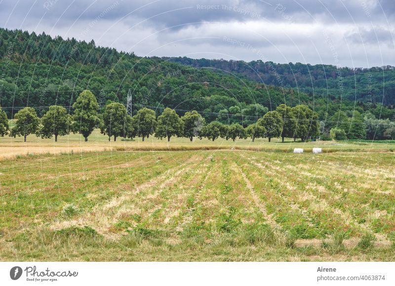 series Field even gap trees Beaded avenue trees Avenue neat lines Pattern Rural Nature Agriculture harvested Roll Rolled bale Bale of straw Arrangement
