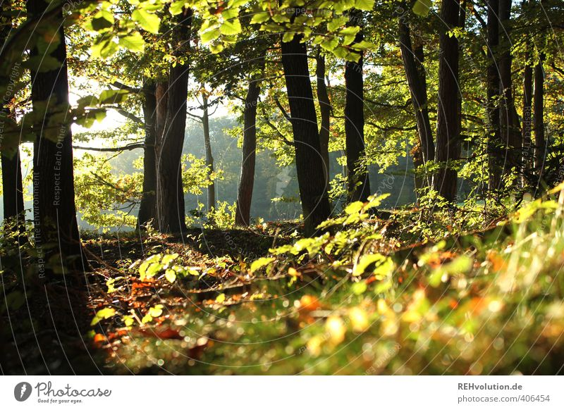 """""""I spend more time in the woods than a squirrel!"""" Environment Nature Plant Tree Bushes Forest Natural Green Hope Sustainability Wood Deciduous forest Relaxation"""