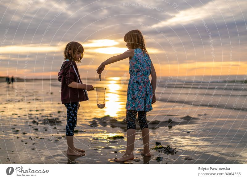 Siblings looking for shellfish during sunset net siblings active beach beautiful child childhood coast family fun girl happiness happy healthy holiday kid