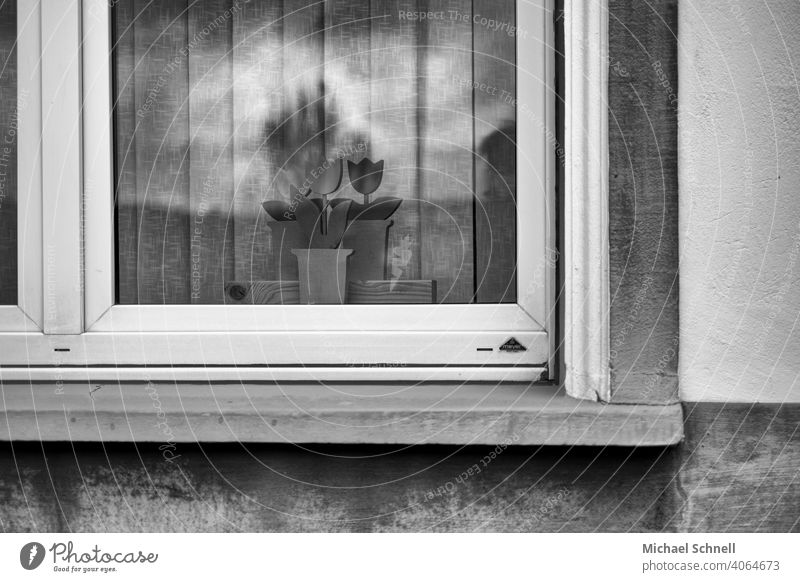 Window with wooden flowers House (Residential Structure) Architecture Facade Deserted Gloomy dreariness sad Black & white photo black-and-white