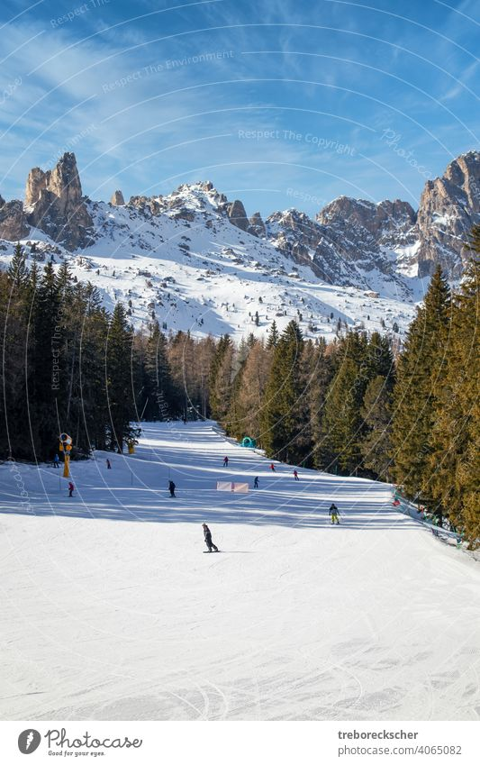blue, red and black ski slopes in Vigo di Fassa, Italian Dolomites in South Tyrol with wonderful slopes and under a blue sky and in front of the typical rugged rock formations
