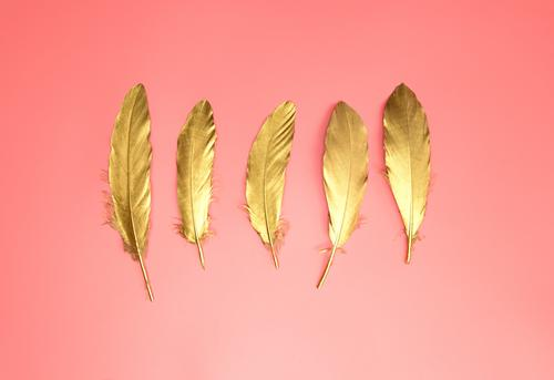 Gold shiny feathers in a row on pastel pink background, Flat lay, retro,modern,colorful stylish concept top view. design element wallpaper copy space wing