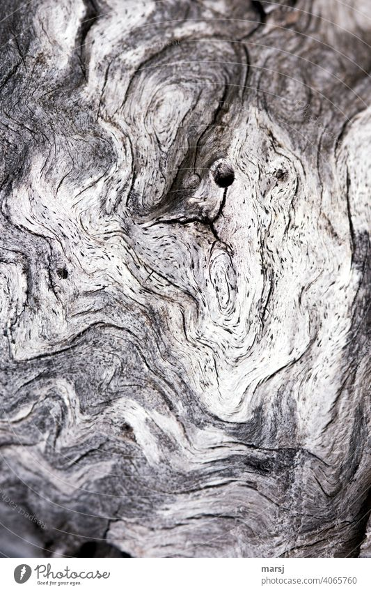 Signs of age. Unconventional structures and shapes on a bleached piece of wood Wood Uniqueness Old Life line Headstrong Gnarled Patina Indefinable Weathered